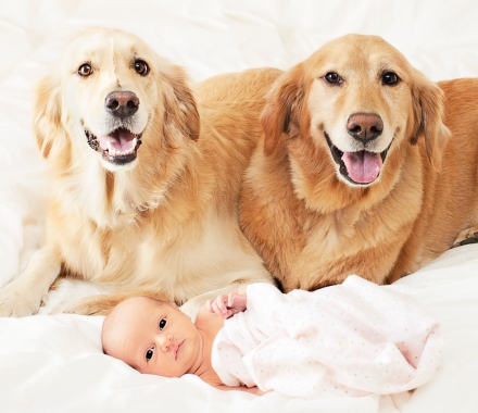 golden retriever, baby photo idea